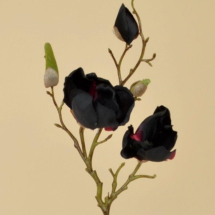 Ветка магнолии черная