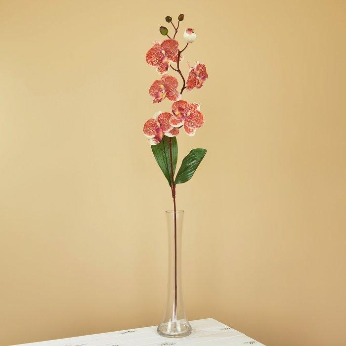 Ветка орхидеи тигровая